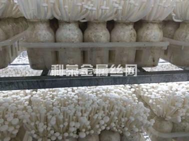 重庆出菇房网架